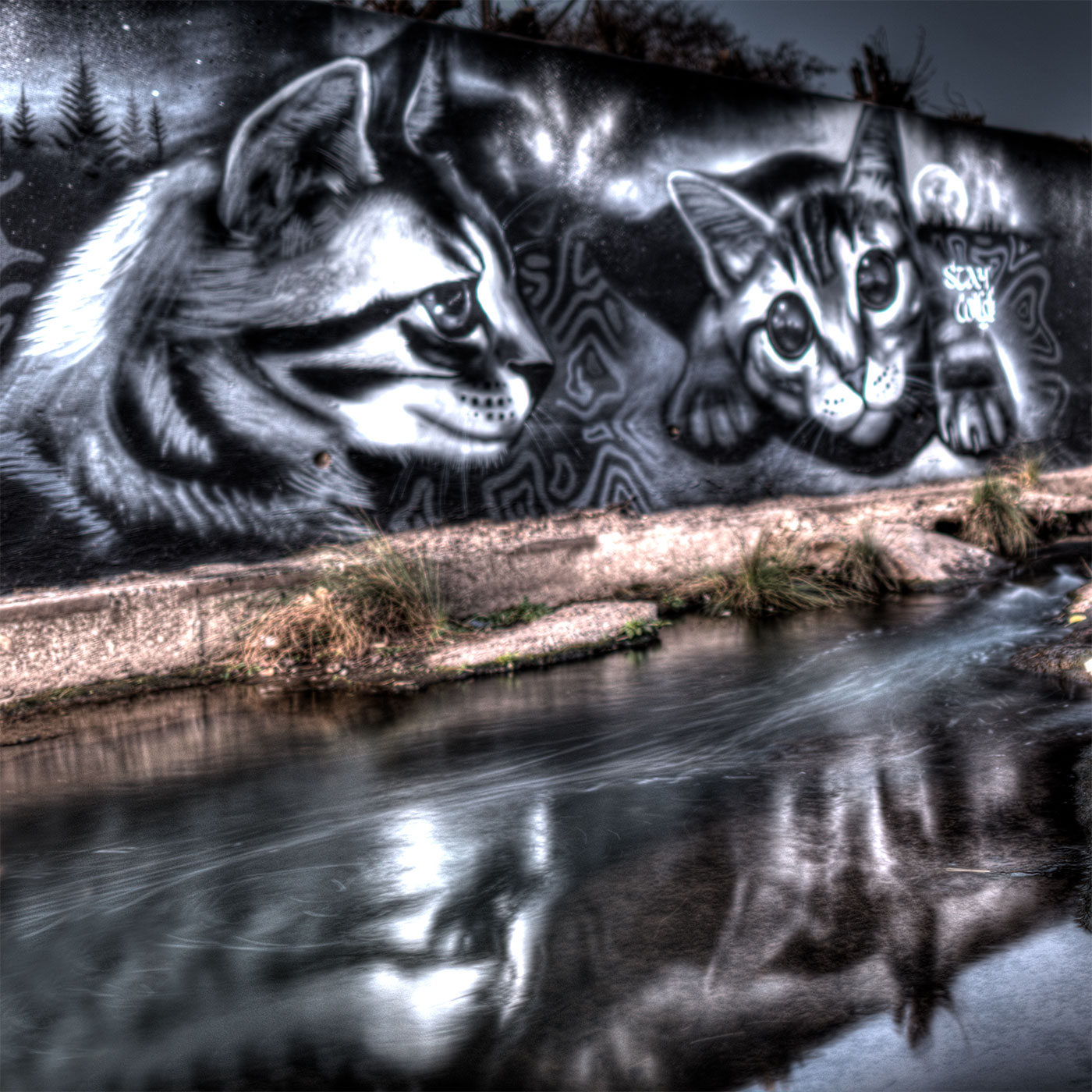 Feral cat river art.